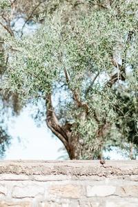 DS_MediterraneanCollection_WM_61
