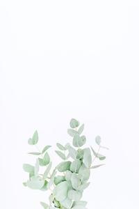 GreeneryCollection_WM_47