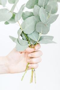 GreeneryCollection_WM_50